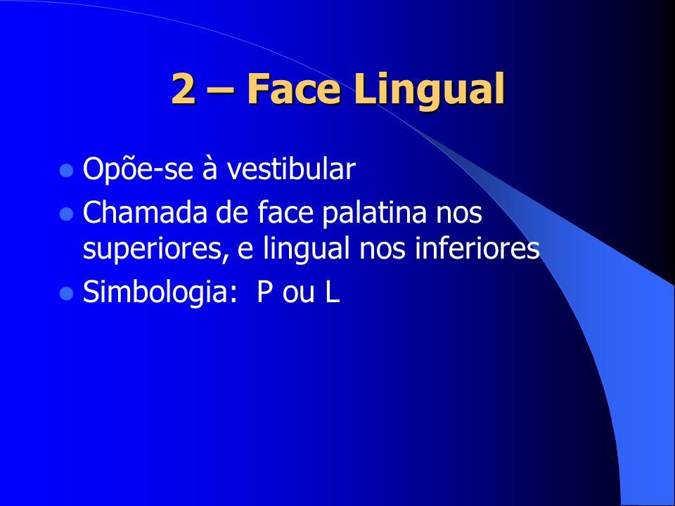 2 – Face Lingual Opõe-se à vestibular