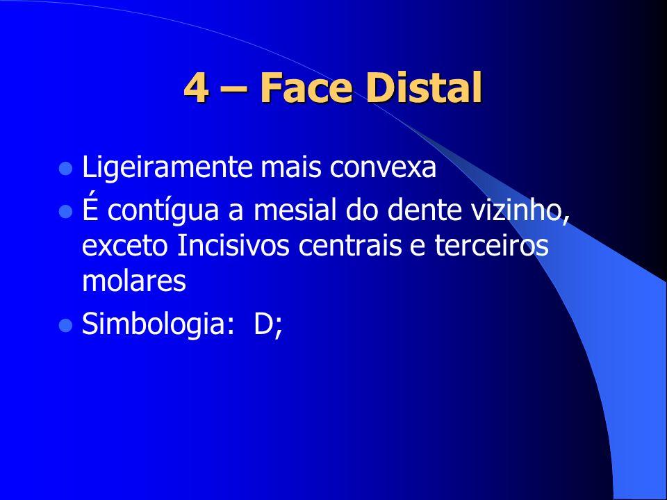 4 – Face Distal Ligeiramente mais convexa