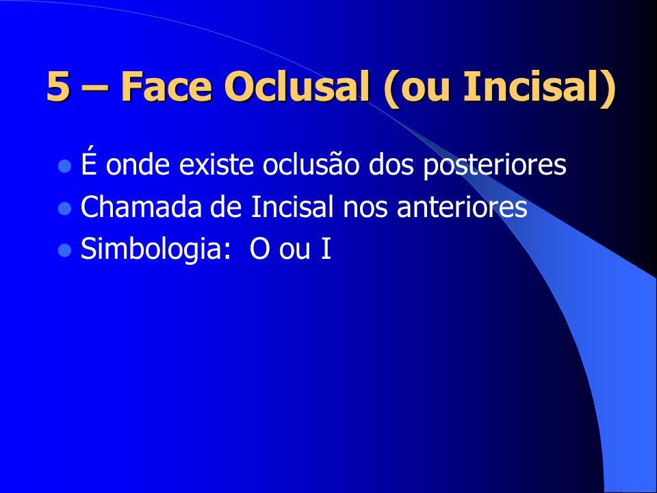 5 – Face Oclusal (ou Incisal)