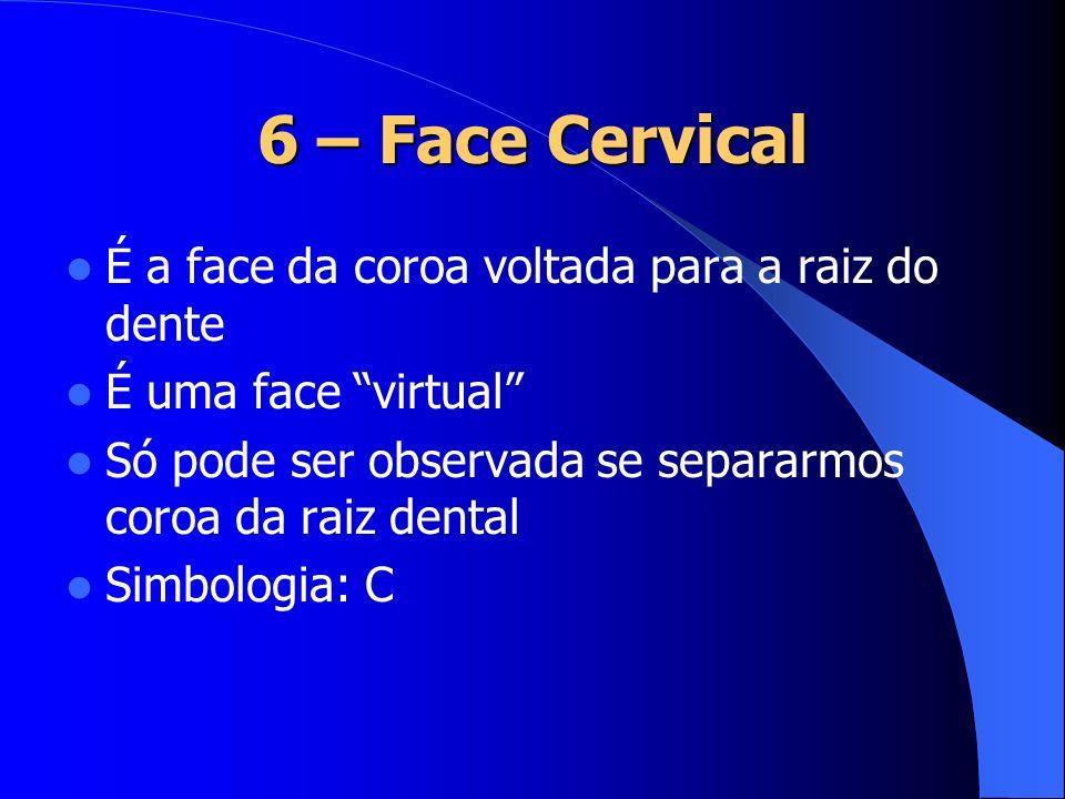 6 – Face Cervical É a face da coroa voltada para a raiz do dente
