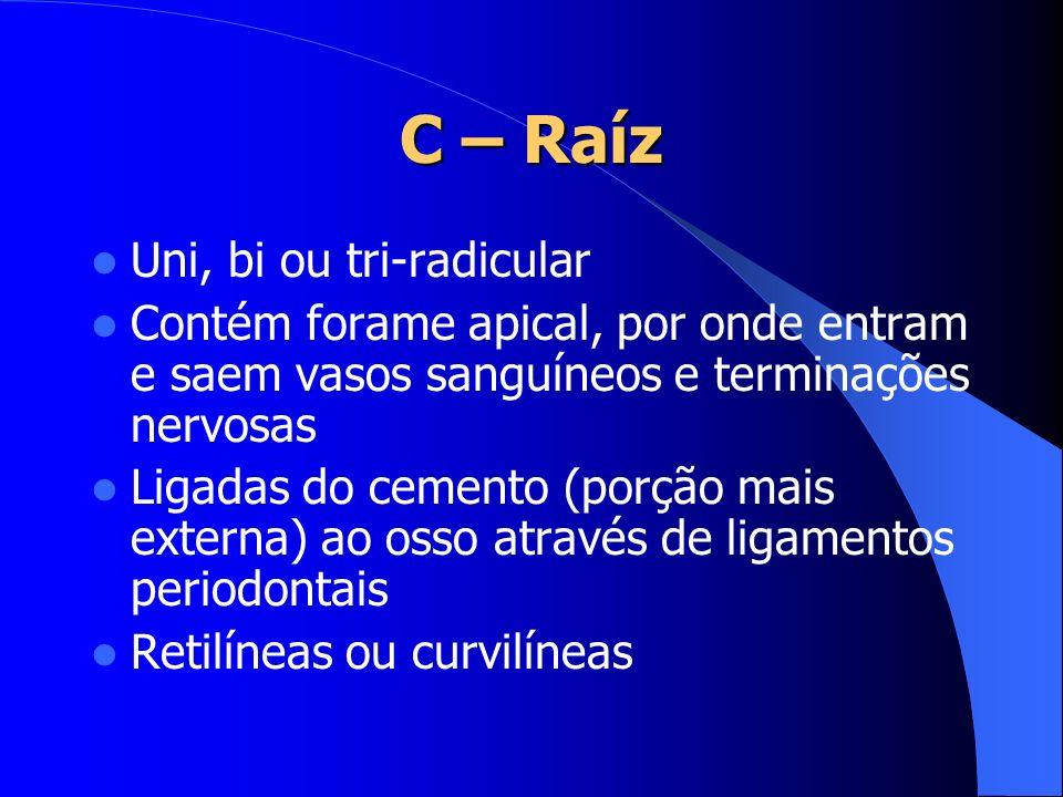 C – Raíz Uni, bi ou tri-radicular