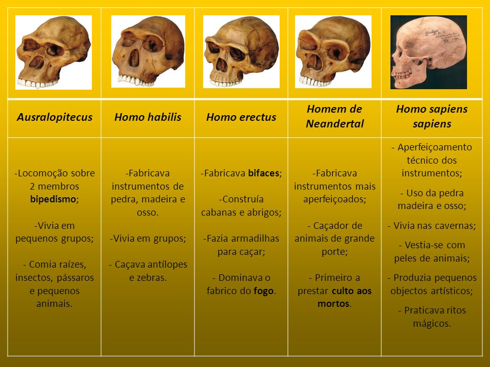 Ausralopitecus Homo habilis Homo erectus Homem de Neandertal