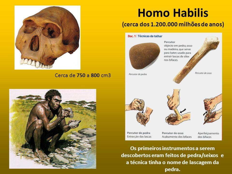 Homo Habilis (cerca dos 1.200.000 milhões de anos)