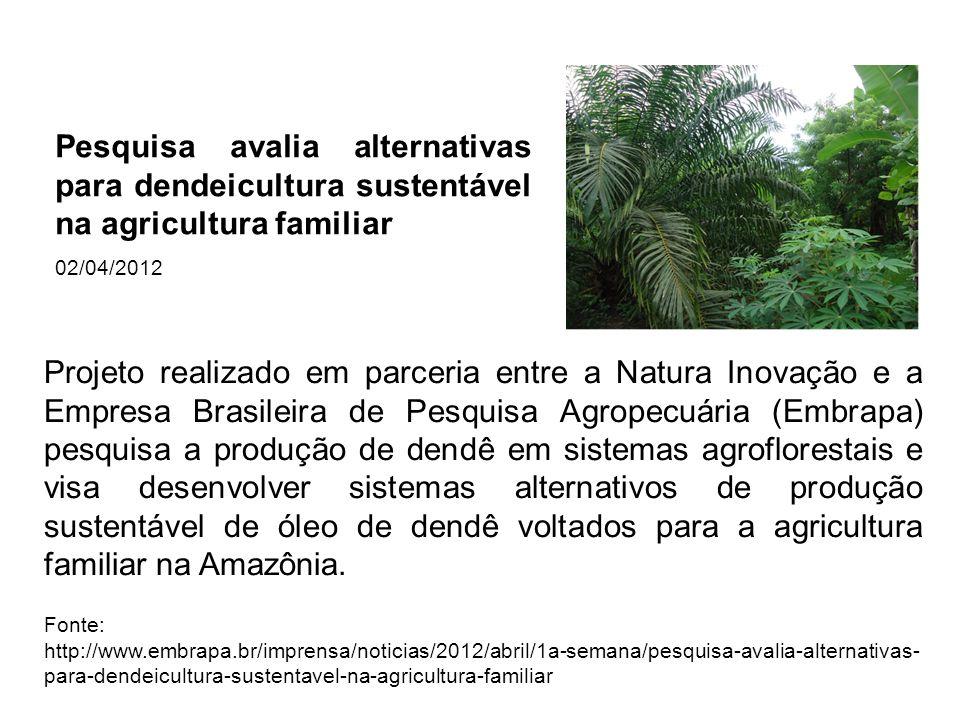 Pesquisa avalia alternativas para dendeicultura sustentável na agricultura familiar