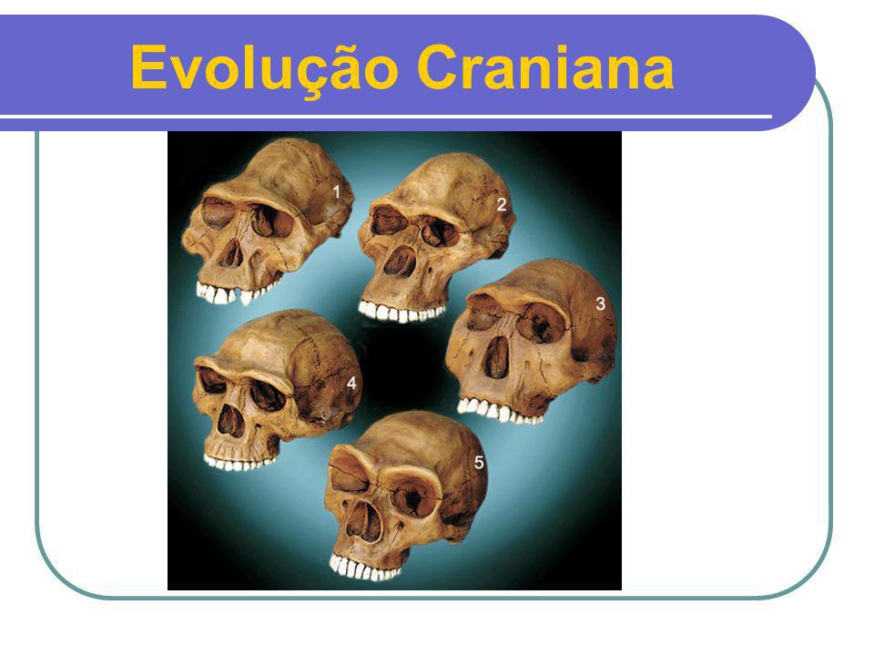 Evolução Craniana