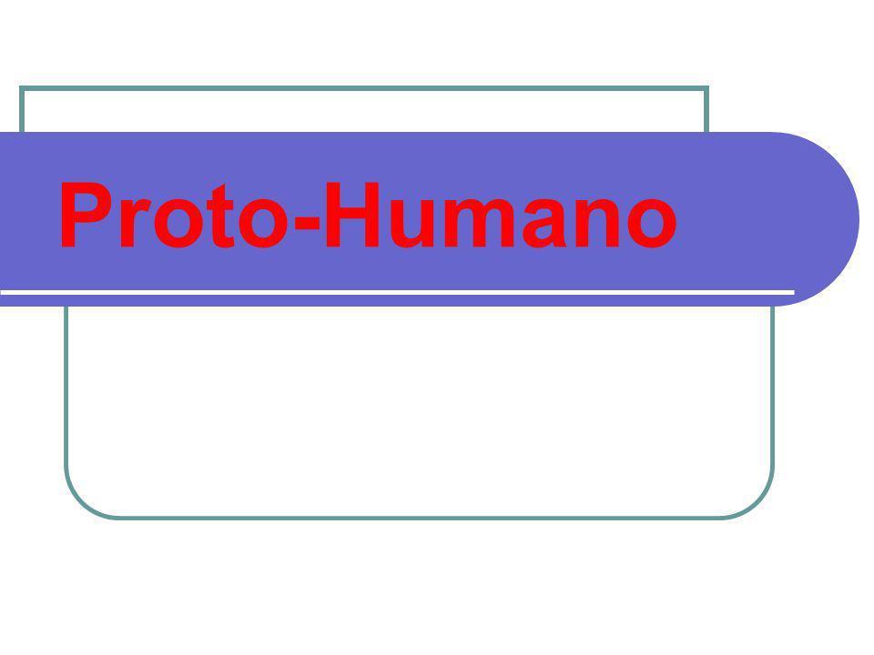 Proto-Humano