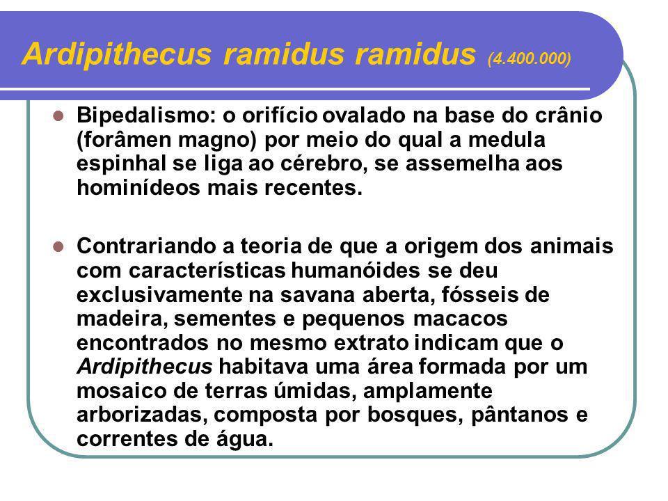 Ardipithecus ramidus ramidus (4.400.000)