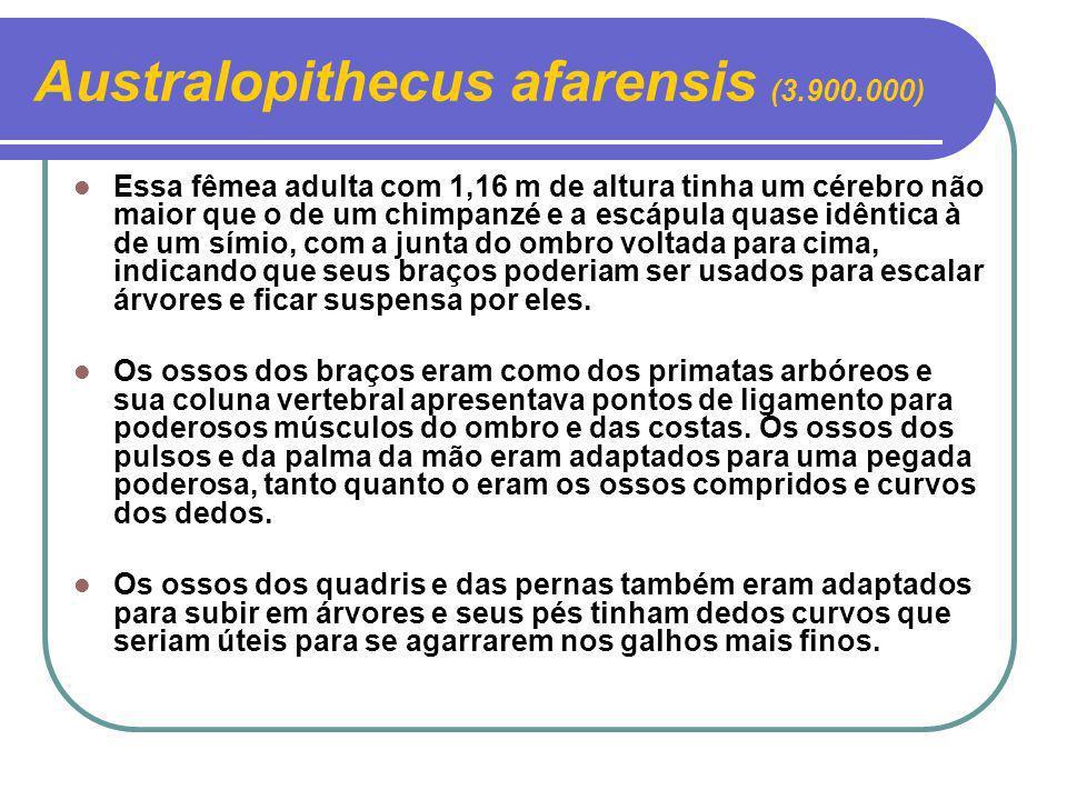 Australopithecus afarensis (3.900.000)