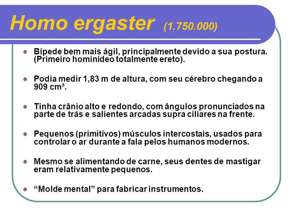 Homo ergaster (1.750.000) Bípede bem mais ágil, principalmente devido a sua postura. (Primeiro hominídeo totalmente ereto).