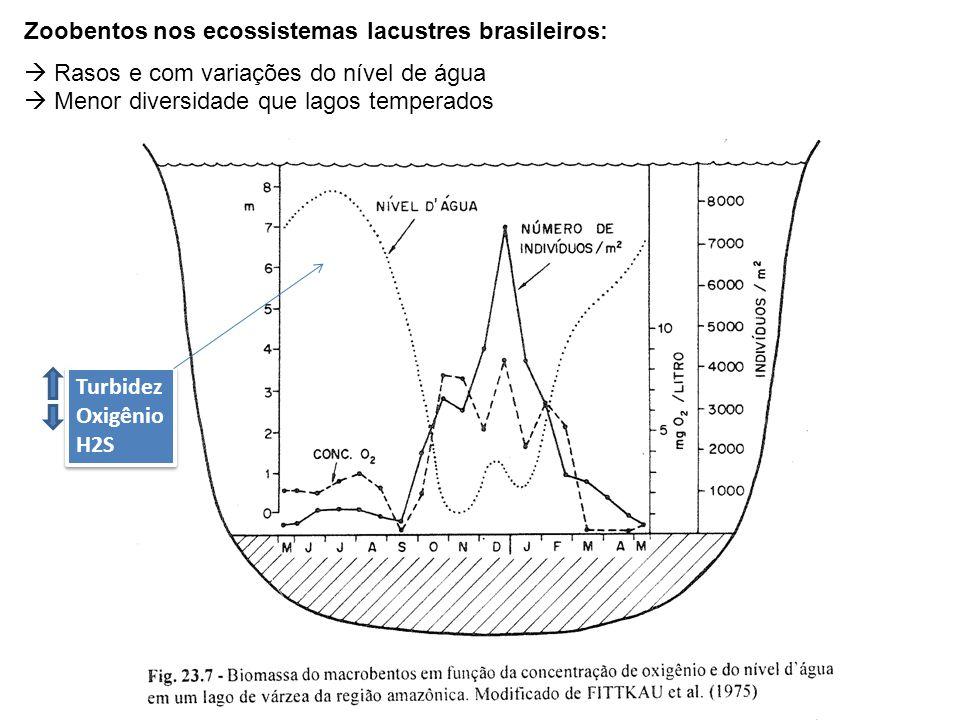 Zoobentos nos ecossistemas lacustres brasileiros: