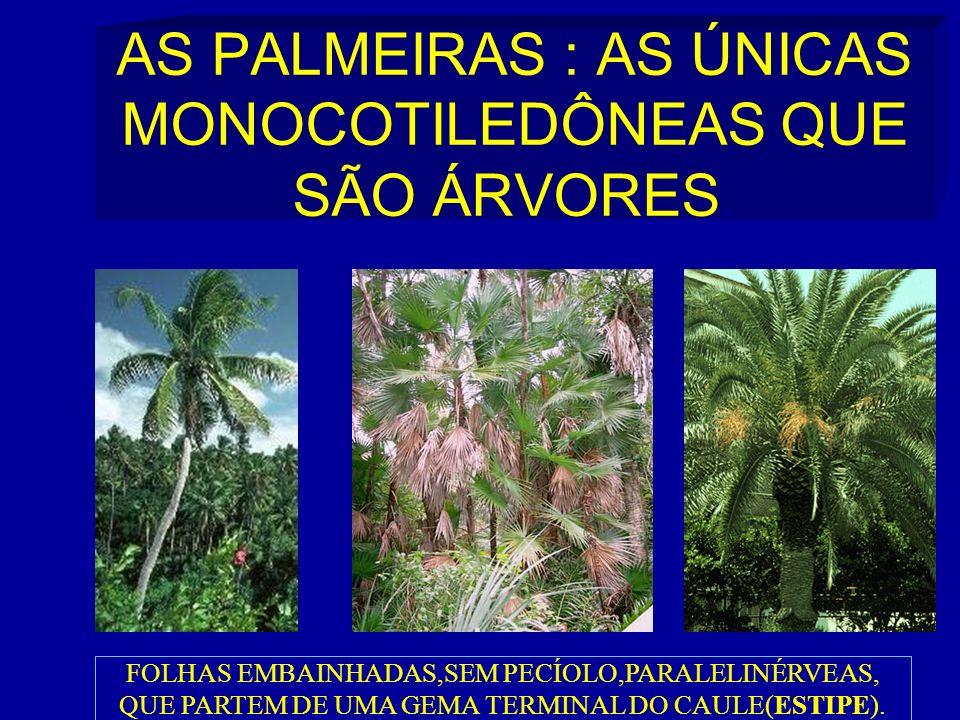 AS PALMEIRAS : AS ÚNICAS MONOCOTILEDÔNEAS QUE SÃO ÁRVORES.