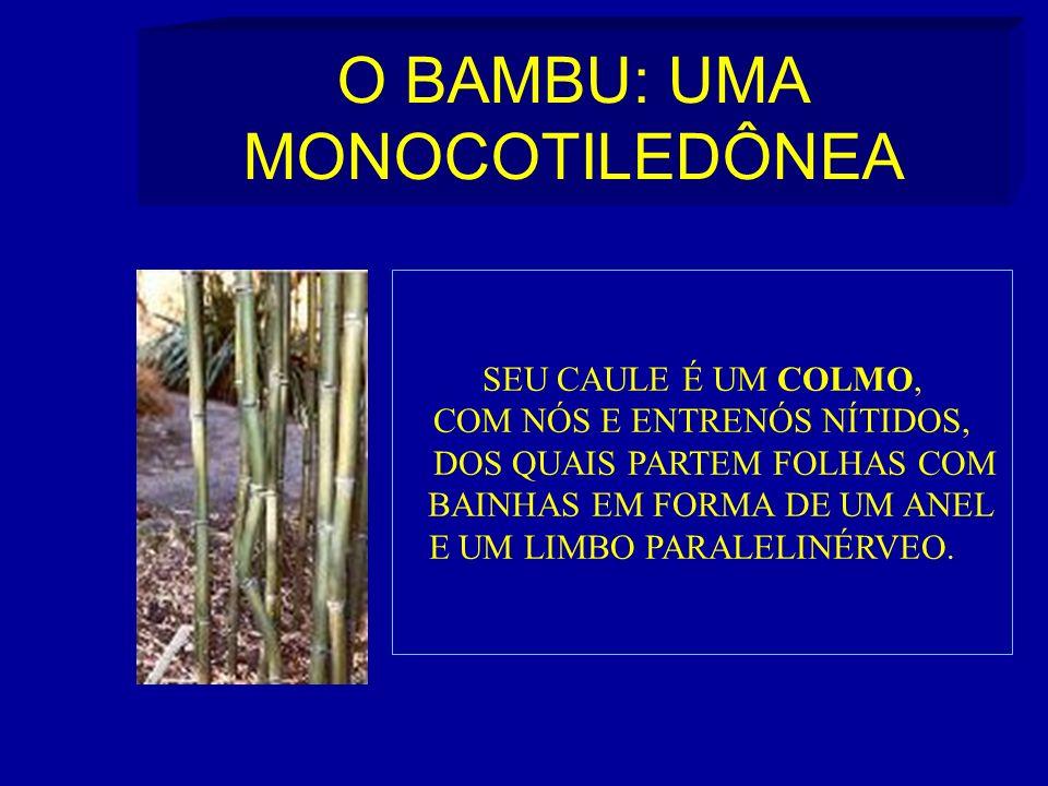 O BAMBU: UMA MONOCOTILEDÔNEA