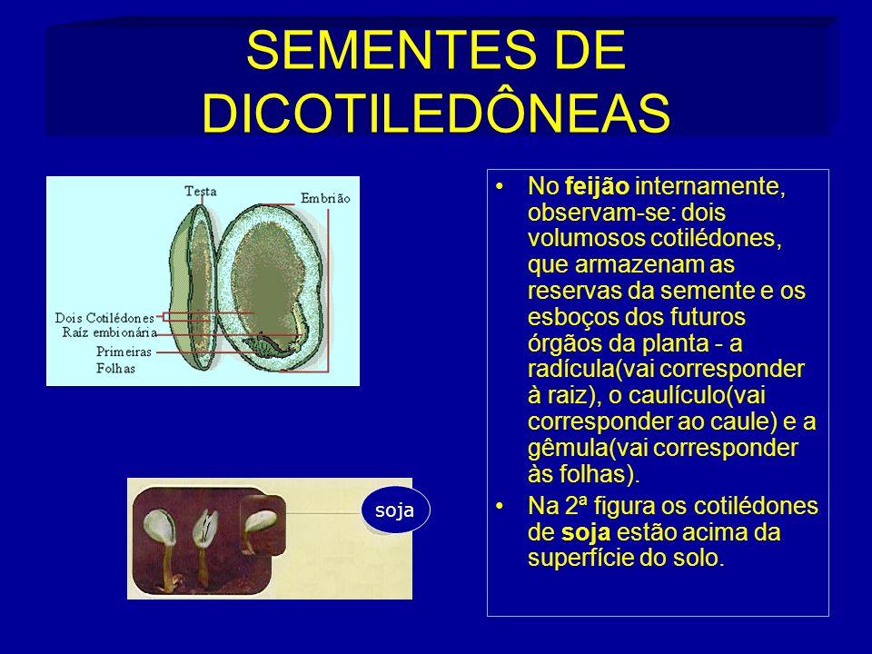 SEMENTES DE DICOTILEDÔNEAS