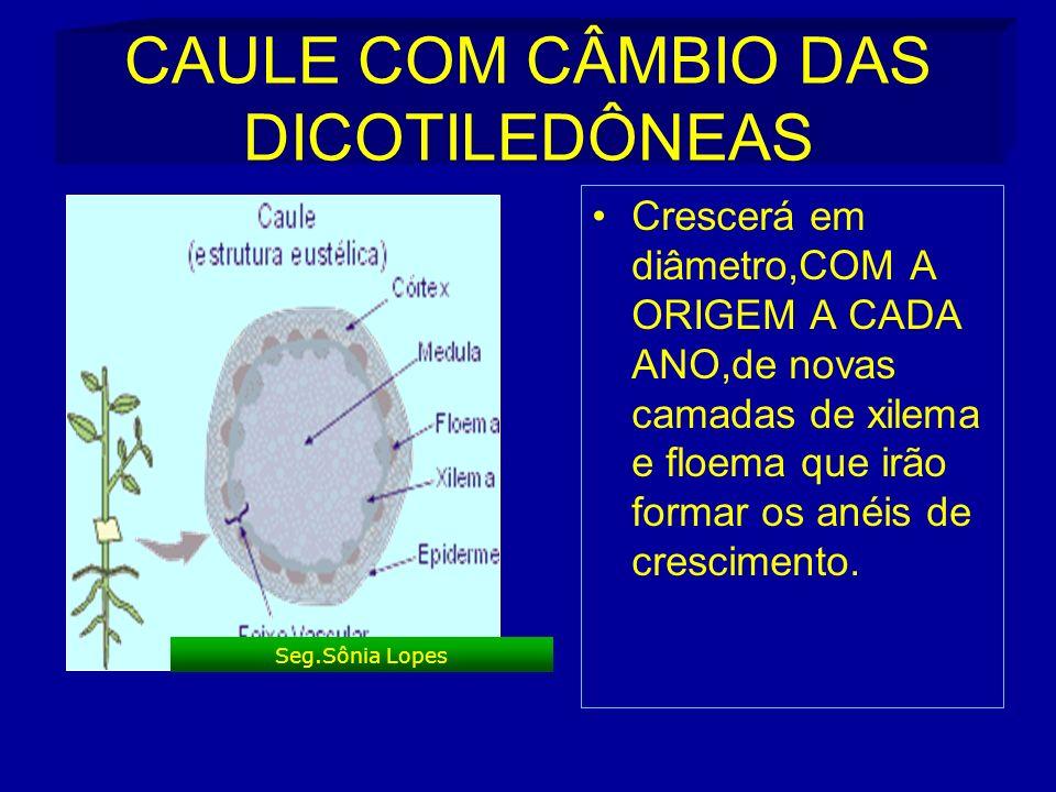 CAULE COM CÂMBIO DAS DICOTILEDÔNEAS