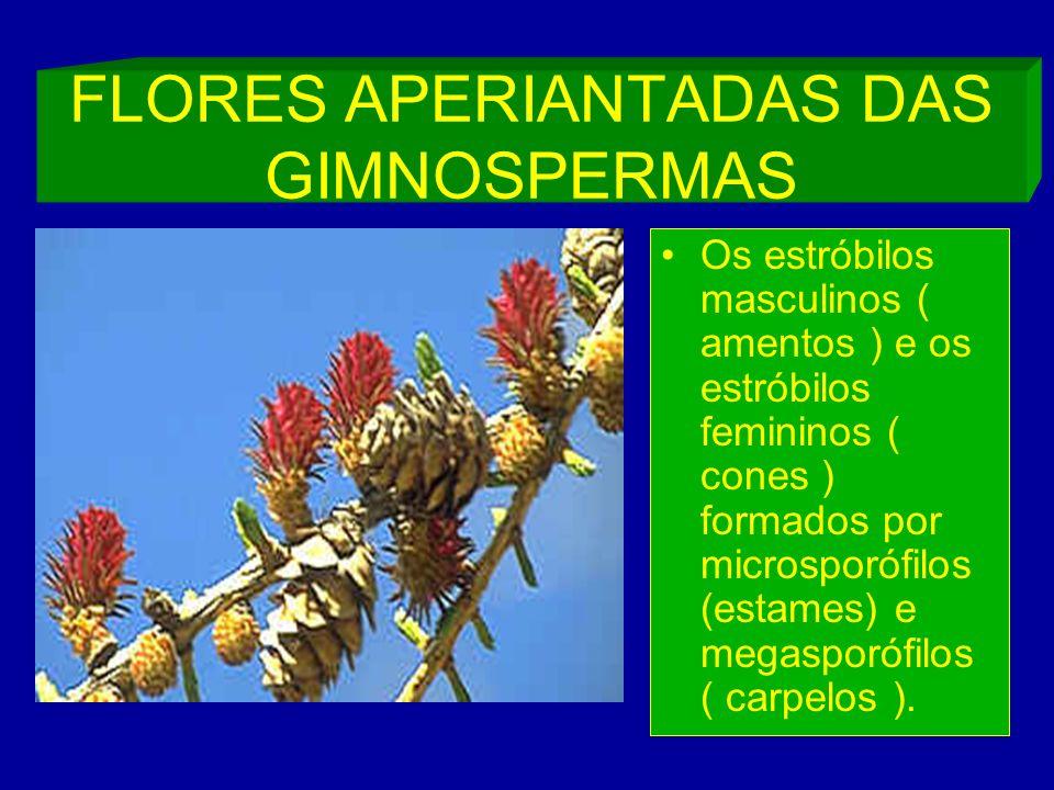 FLORES APERIANTADAS DAS GIMNOSPERMAS