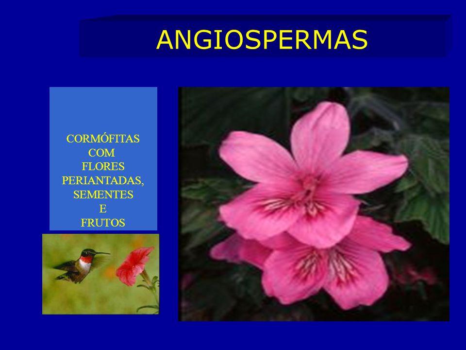 ANGIOSPERMAS CORMÓFITAS COM FLORES PERIANTADAS, SEMENTES E FRUTOS