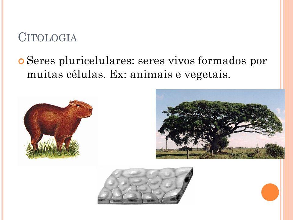 Citologia Seres pluricelulares: seres vivos formados por muitas células. Ex: animais e vegetais.
