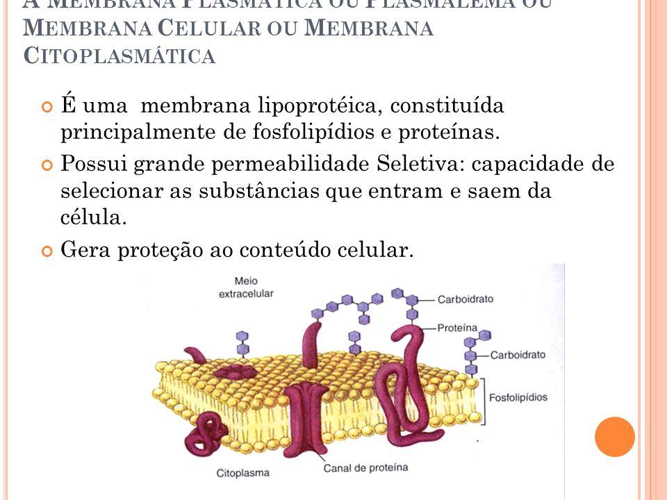 A Membrana Plasmática ou Plasmalema ou Membrana Celular ou Membrana Citoplasmática