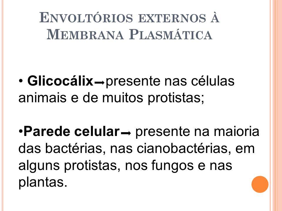 Envoltórios externos à Membrana Plasmática