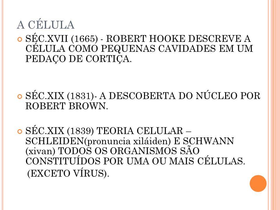 A CÉLULA SÉC.XVII (1665) - ROBERT HOOKE DESCREVE A CÉLULA COMO PEQUENAS CAVIDADES EM UM PEDAÇO DE CORTIÇA.