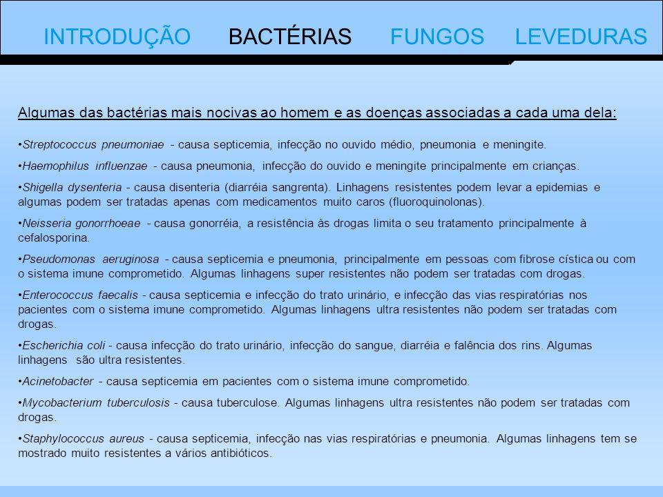 INTRODUÇÃO BACTÉRIAS FUNGOS LEVEDURAS