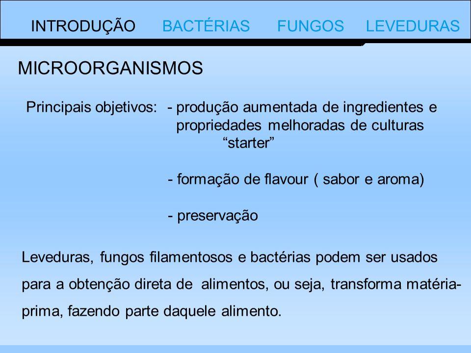 MICROORGANISMOS INTRODUÇÃO BACTÉRIAS FUNGOS LEVEDURAS
