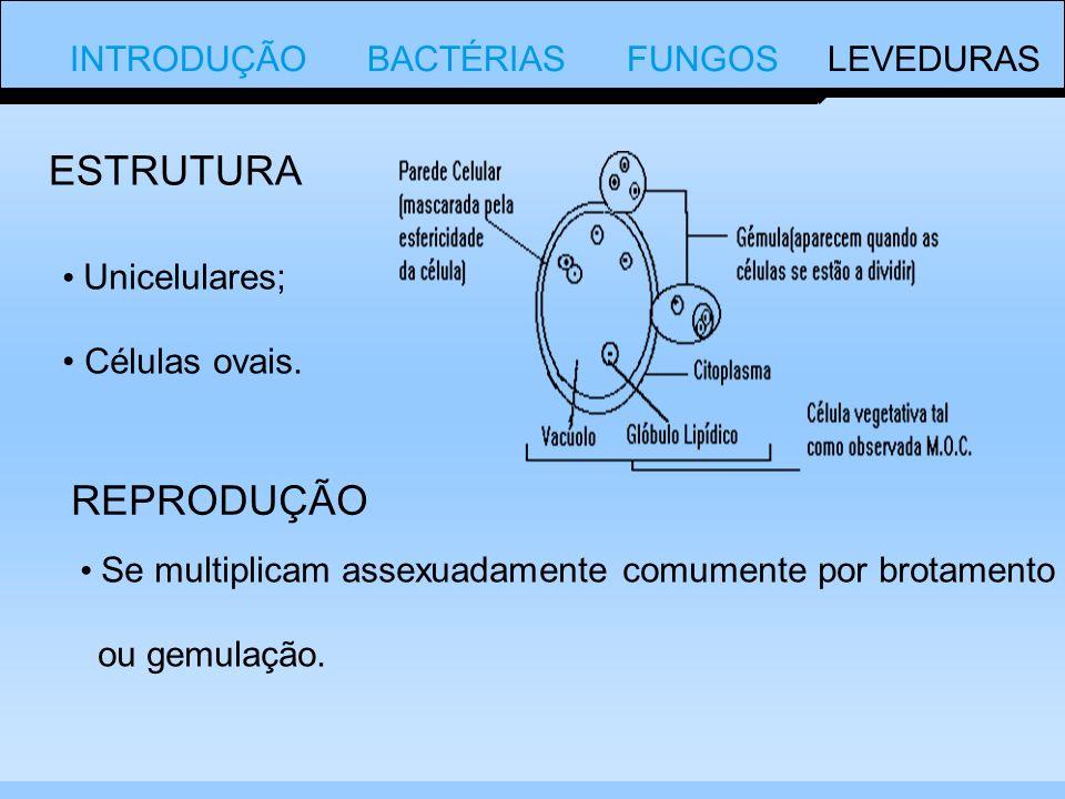 ESTRUTURA REPRODUÇÃO INTRODUÇÃO BACTÉRIAS FUNGOS LEVEDURAS