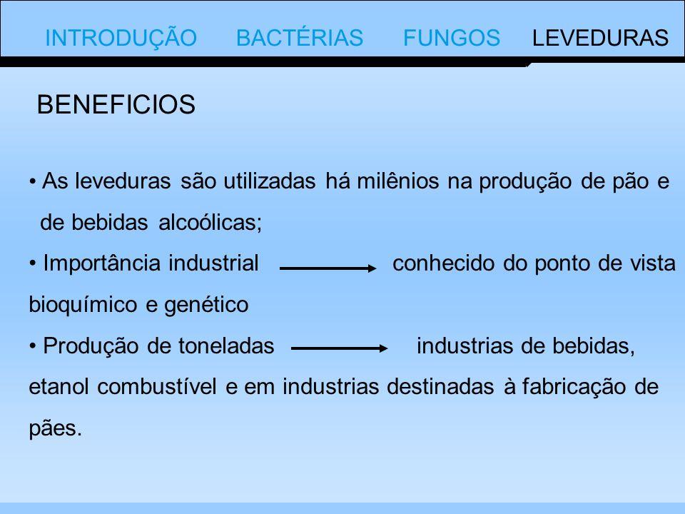 BENEFICIOS INTRODUÇÃO BACTÉRIAS FUNGOS LEVEDURAS