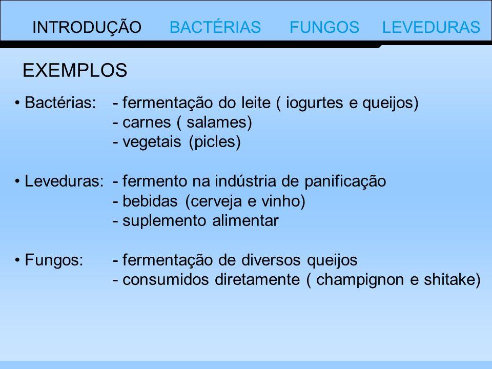 EXEMPLOS INTRODUÇÃO BACTÉRIAS FUNGOS LEVEDURAS