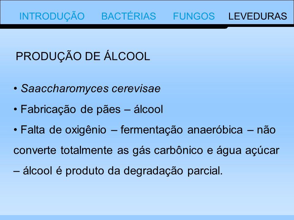 Saaccharomyces cerevisae Fabricação de pães – álcool