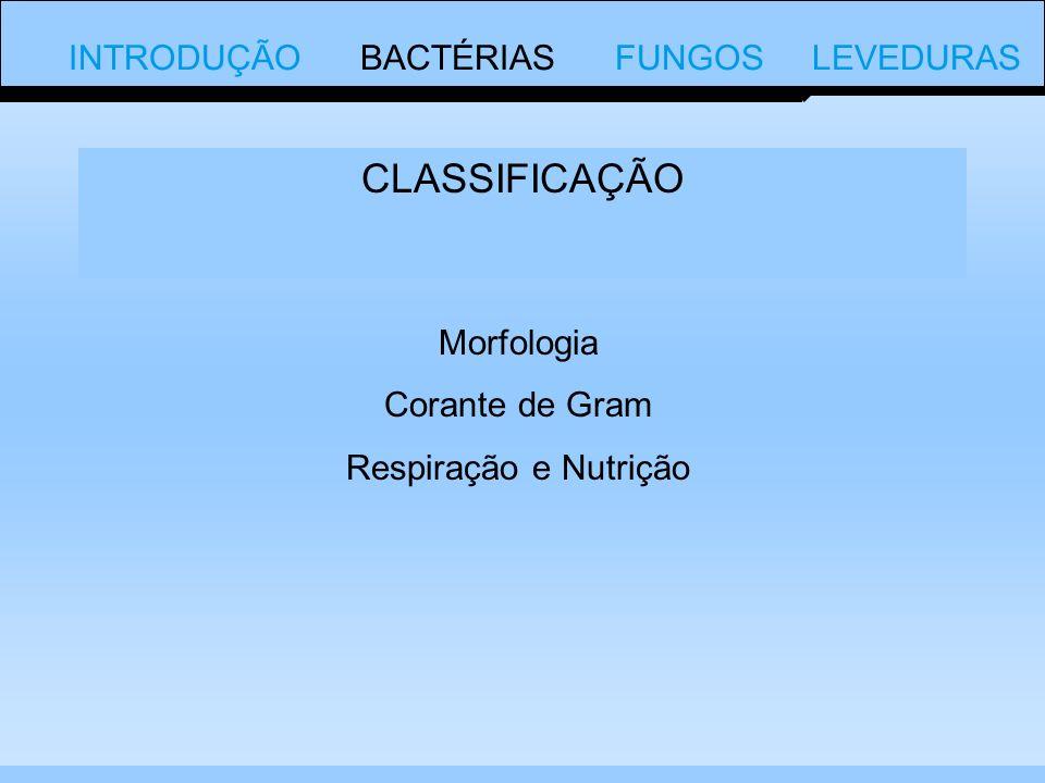 CLASSIFICAÇÃO INTRODUÇÃO BACTÉRIAS FUNGOS LEVEDURAS Morfologia