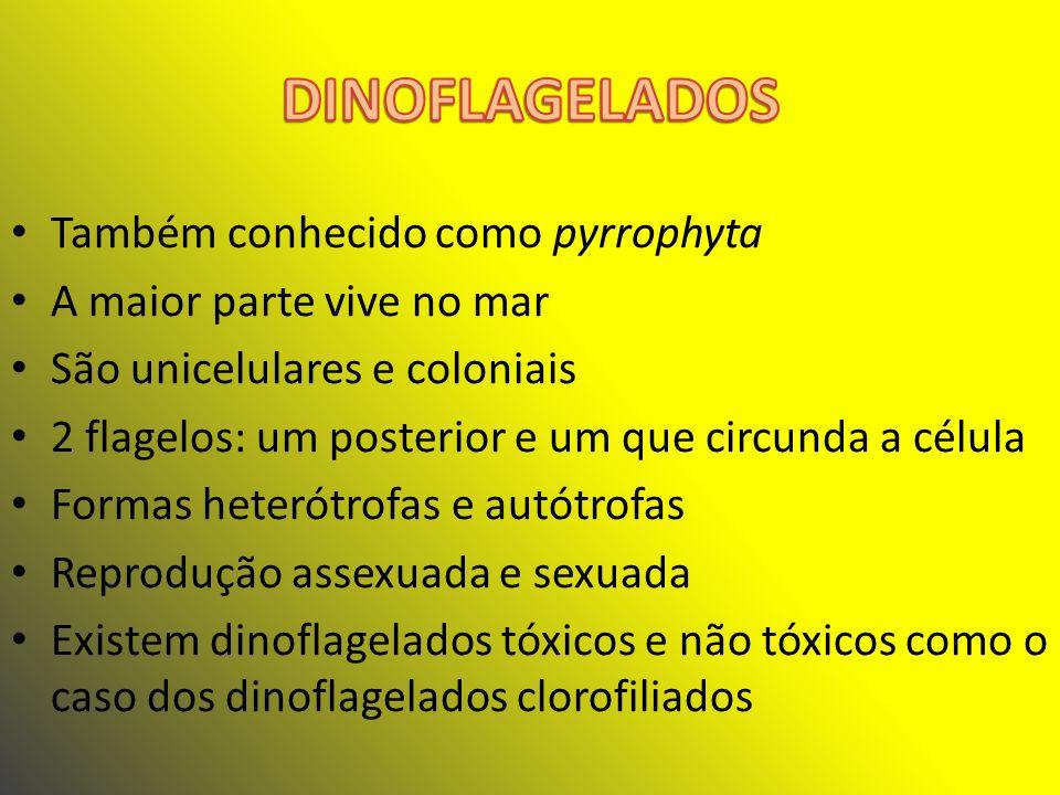 DINOFLAGELADOS Também conhecido como pyrrophyta
