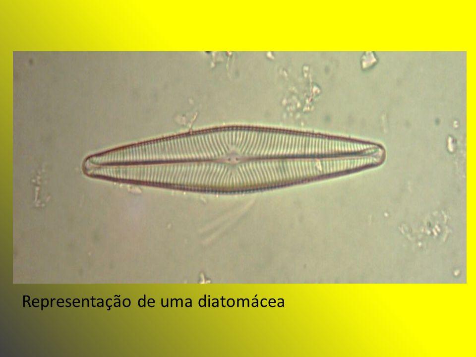 Representação de uma diatomácea