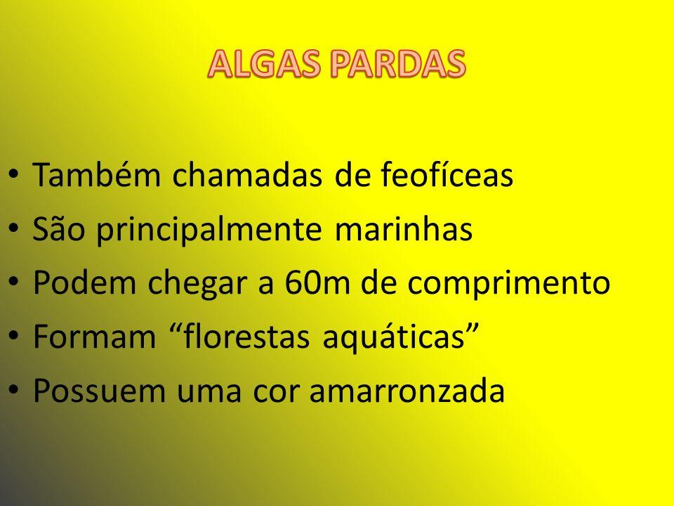 ALGAS PARDAS Também chamadas de feofíceas São principalmente marinhas