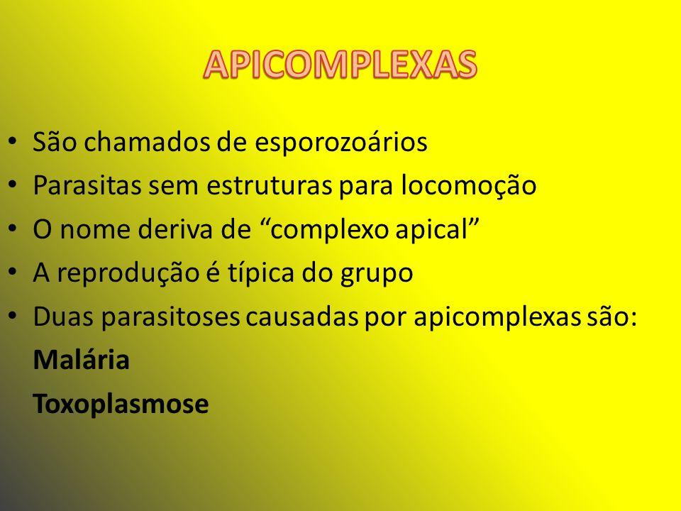 APICOMPLEXAS São chamados de esporozoários