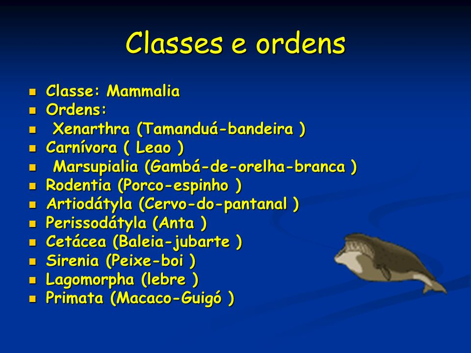 Classes e ordens Classe: Mammalia Ordens: