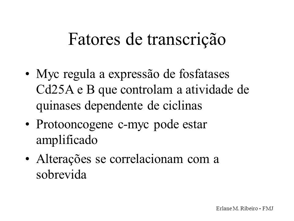 Fatores de transcrição