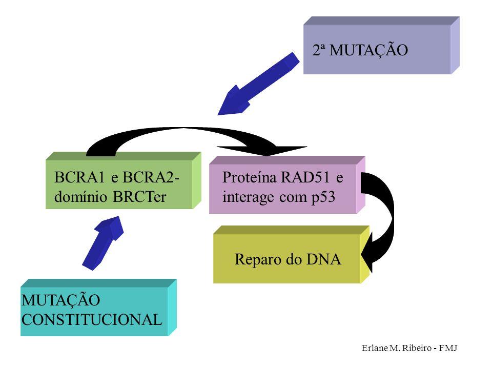 BCRA1 e BCRA2- domínio BRCTer Proteína RAD51 e interage com p53