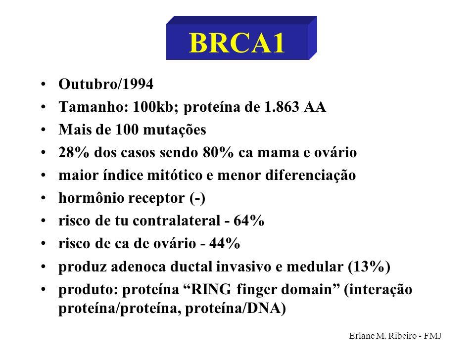 BRCA1 Outubro/1994 Tamanho: 100kb; proteína de 1.863 AA
