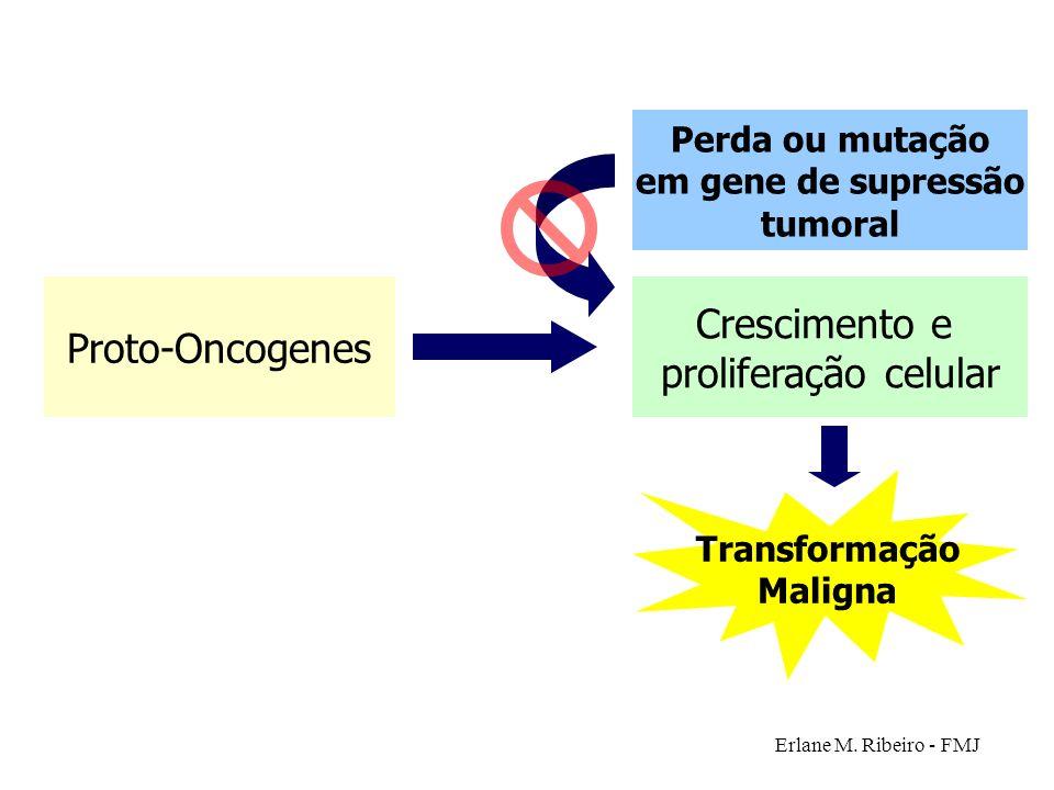 Crescimento e Proto-Oncogenes proliferação celular Perda ou mutação