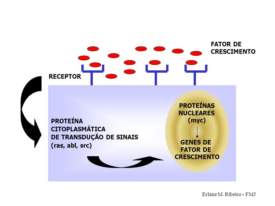 PROTEÍNAS NUCLEARES (myc) GENES DE