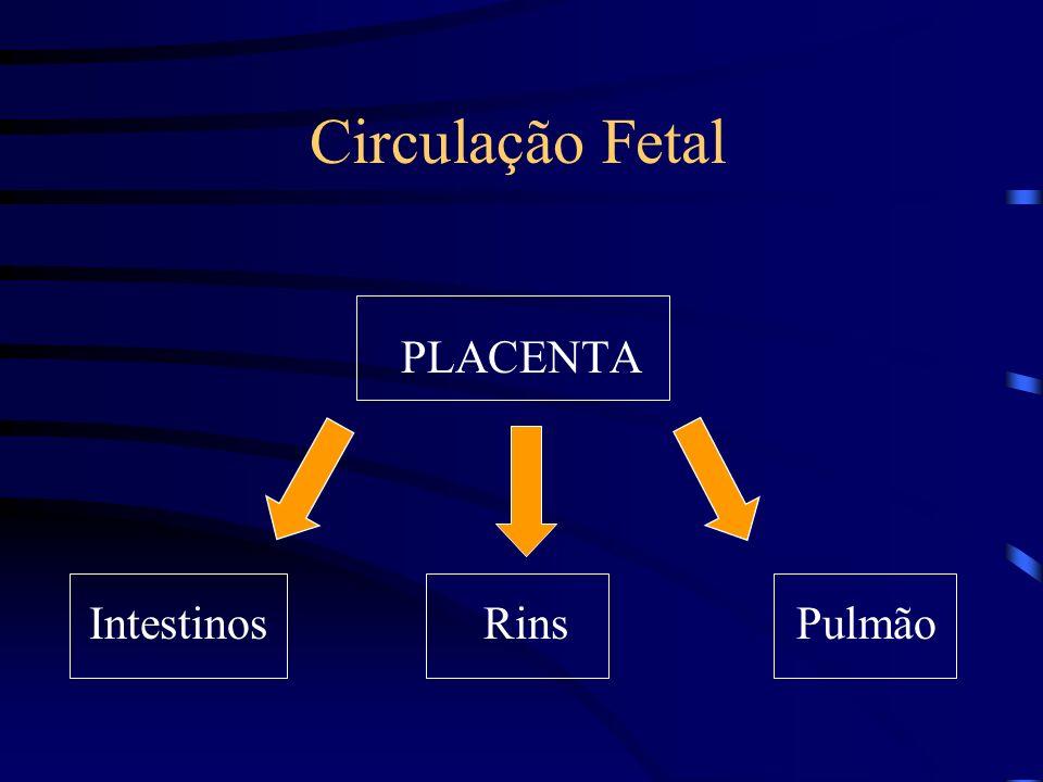 Circulação Fetal PLACENTA Intestinos Rins Pulmão