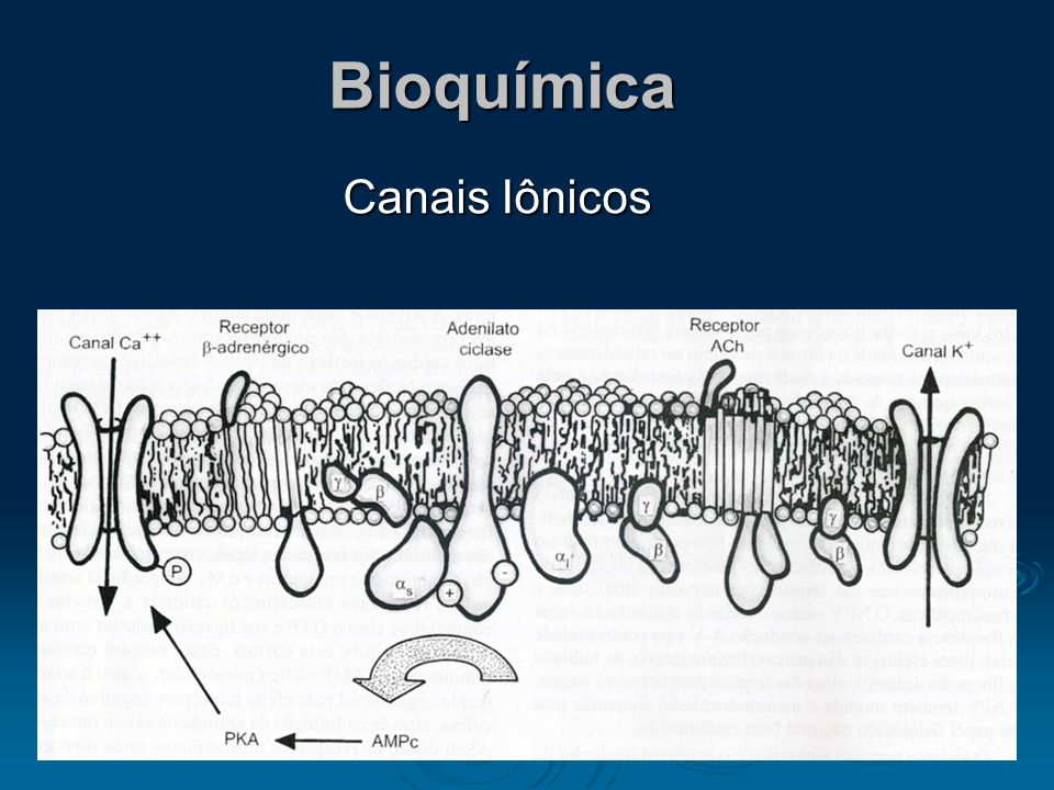 Bioquímica Canais Iônicos