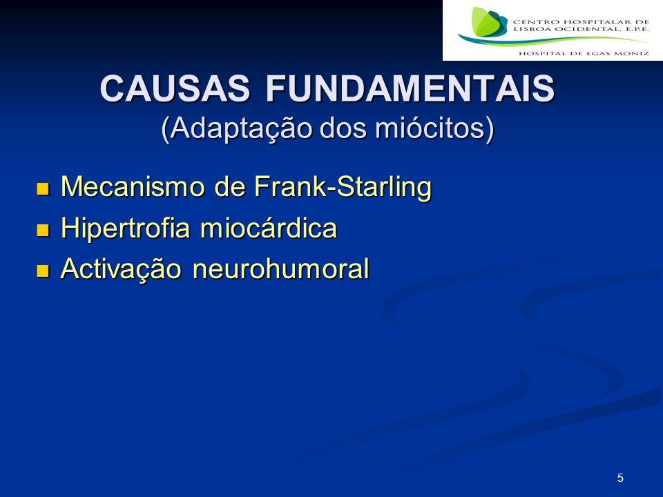 CAUSAS FUNDAMENTAIS (Adaptação dos miócitos)