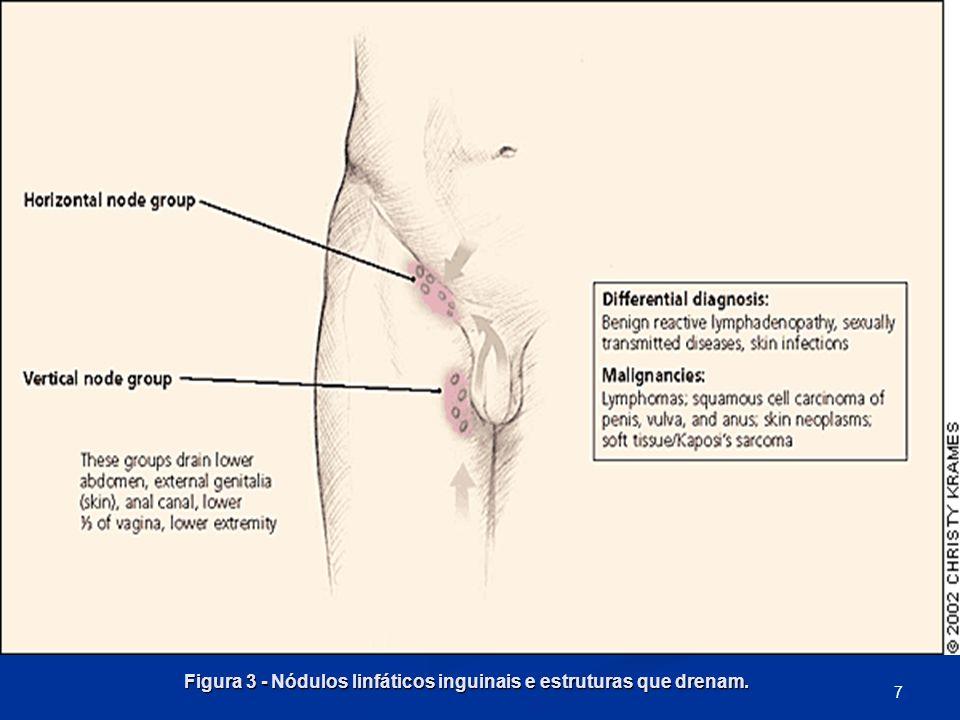 Figura 3 - Nódulos linfáticos inguinais e estruturas que drenam.