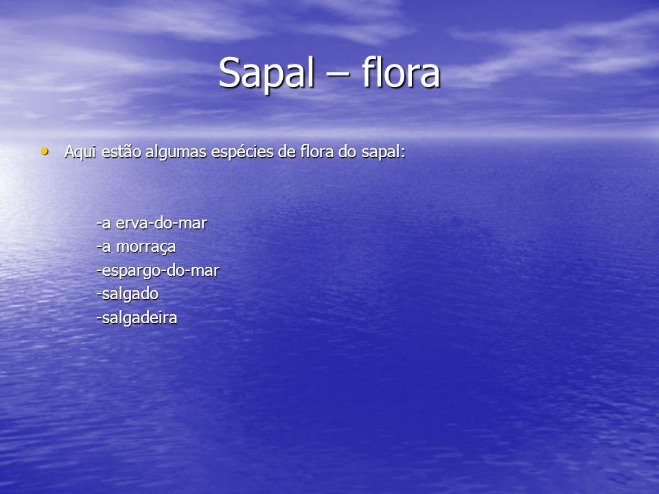 Sapal – flora Aqui estão algumas espécies de flora do sapal: