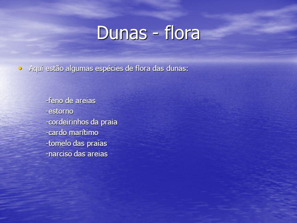 Dunas - flora Aqui estão algumas espécies de flora das dunas: