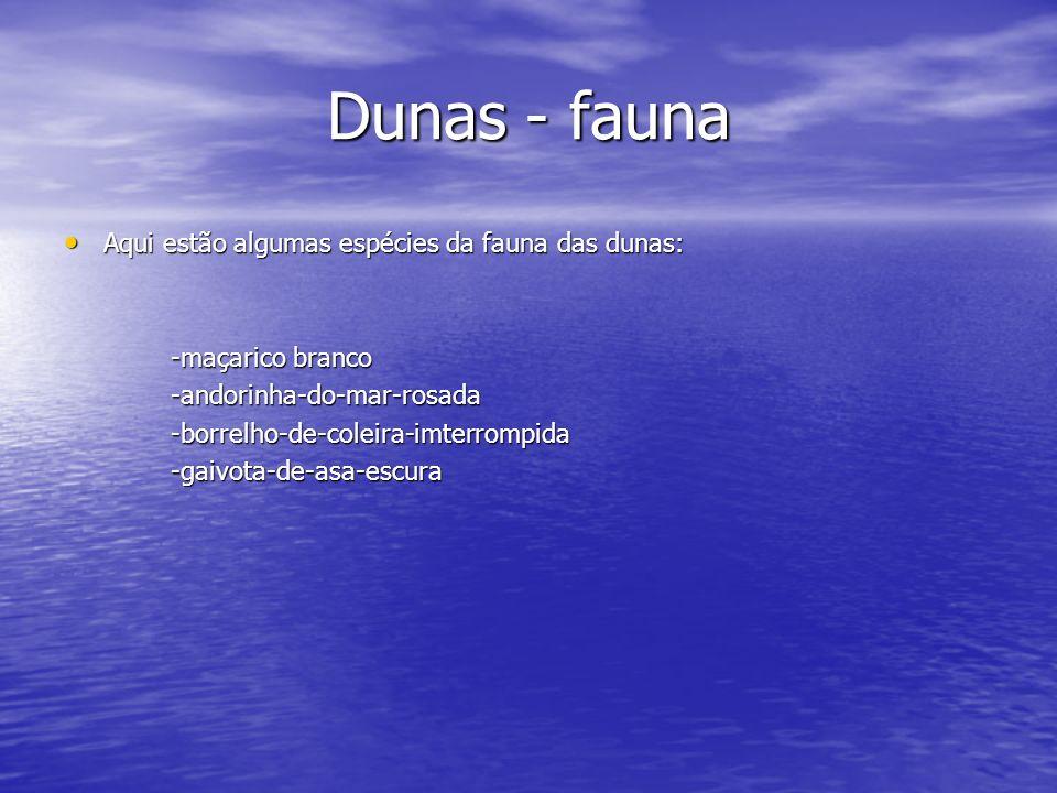 Dunas - fauna Aqui estão algumas espécies da fauna das dunas: