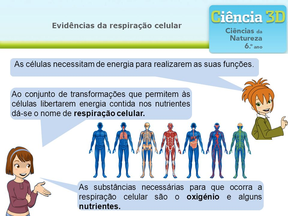 Evidências da respiração celular