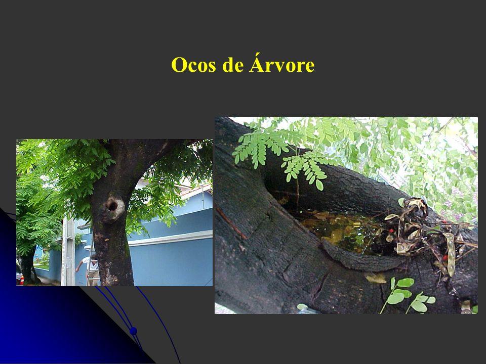 Ocos de Árvore